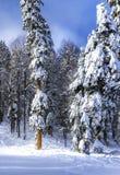 Estância de esqui Krasnaya Polyana SOCHI Imagens de Stock