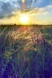 Estípite plumoso de la estepa en el campo en la salida del sol, puesta del sol Imagen de archivo libre de regalías