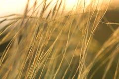 Estípite plumoso en la puesta del sol en el contraluz Imágenes de archivo libres de regalías