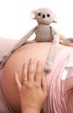 Estómago de la muchacha embarazada en un fondo blanco imagen de archivo