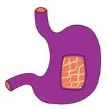 Estómago ultravioleta Foto de archivo