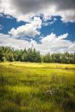 Estónia fotografia de stock royalty free