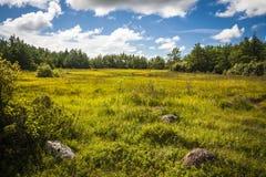 Estónia Imagem de Stock