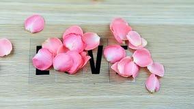 Estúdio cor-de-rosa das pétalas cor-de-rosa vídeos de arquivo