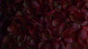 Estúdio cor-de-rosa das pétalas cor-de-rosa filme