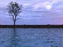 Esté en la luna el árbol Imagen de archivo libre de regalías