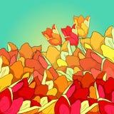 Est la fleur rouge de tulipe Illustration de vecteur Photographie stock libre de droits