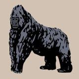 Est un jeune fort sur le gorila Image libre de droits