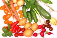 Estação da colheita, legume fresco fotografia de stock royalty free