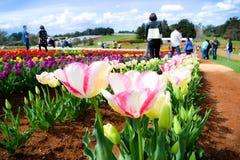 Estação da flor Imagem de Stock Royalty Free