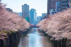 Estação da flor de cerejeira no Tóquio no rio de Meguro, Japão imagem de stock royalty free