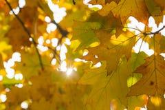 Estação das folhas de outono bonitas Fotos de Stock