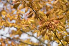 Estação das folhas de outono bonitas Foto de Stock