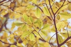Estação das folhas de outono bonitas Imagem de Stock Royalty Free