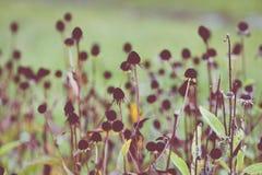 Estação das folhas de outono bonitas Fotos de Stock Royalty Free