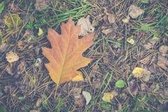 Estação das folhas de outono bonitas Imagens de Stock