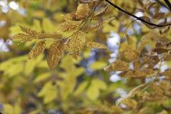 Estação das folhas de outono bonitas Fundo da natureza Imagem de Stock
