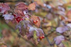 Estação das folhas de outono bonitas Fundo da natureza Foto de Stock Royalty Free