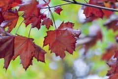 Estação das folhas de outono bonitas Fundo da natureza Imagens de Stock Royalty Free
