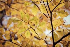 Estação das folhas de outono bonitas Fundo da natureza Fotografia de Stock Royalty Free