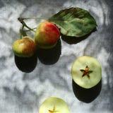 Estação das maçãs Fotos de Stock