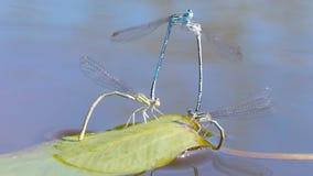Estação de acoplamento das libélulas filme