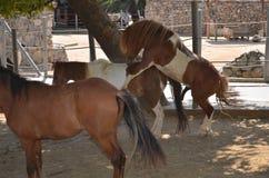 estação de acoplamento dos cavalos Imagem de Stock Royalty Free