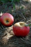 Estação de colheita de Apple Imagem de Stock Royalty Free