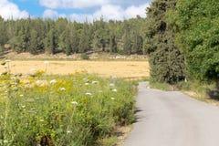 Estação de mola da flor da jarda do campo da estrada de floresta, Israel Imagem de Stock