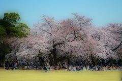 Estação #4 de Sakura Foto de Stock Royalty Free