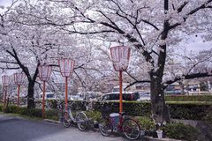 Estação de Sakura em Kyoto foto de stock