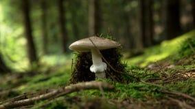 Estação do cogumelo em Europa imagens de stock