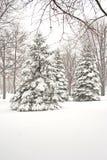 Estação do inverno. imagens de stock royalty free