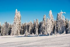 Estação do inverno Fotografia de Stock Royalty Free