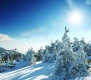 Estação do inverno Imagens de Stock Royalty Free