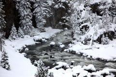 Estação do inverno em Yellowstone imagens de stock