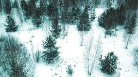 Estação do inverno Uma vista aérea Floresta do inverno e árvores desencapadas Tiro do helicóptero filme