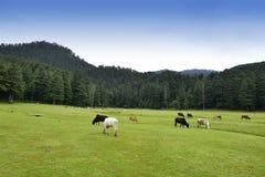Estação do monte de Khajjiar perto da Índia de Dalhousie Fotos de Stock