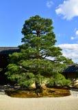 Estação do outono da floresta do bordo em Japão Fotografia de Stock