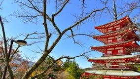Estação do outono da floresta do bordo em Japão com Mountain View de Fuji Fotografia de Stock