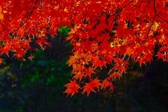 Estação do outono no parque nacional de Naejangsan, Coreia do Sul Beautifu foto de stock