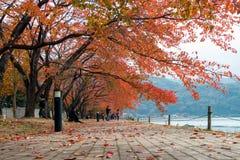 Estação do outono que vem pelo bordo vermelho no lago Kawaguchiko em Japão Foto de Stock Royalty Free