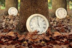 A estação do tempo de queda cronometra o fundo da floresta da folha Imagem de Stock Royalty Free