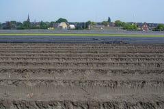 Estação nova da colheita no aspargo vegetal dos campos do aspargo, o branco e o roxo que cresce descoberto na exploração agrícola imagem de stock royalty free