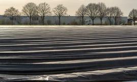 A estação nova no aspargo branco coloca em Alemanha, cov holandês imagens de stock royalty free