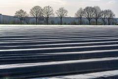 A estação nova no aspargo branco coloca em Alemanha, cov holandês fotografia de stock