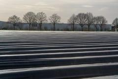 A estação nova no aspargo branco coloca em Alemanha, cov holandês foto de stock royalty free