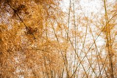 Estação seca de bambu imagens de stock royalty free