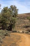 A estação velha de Kanyaka da árvore de goma, Flinders varia, Sul da Austrália imagens de stock