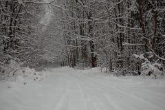 estações da estrada de floresta da paisagem do inverno Imagem de Stock